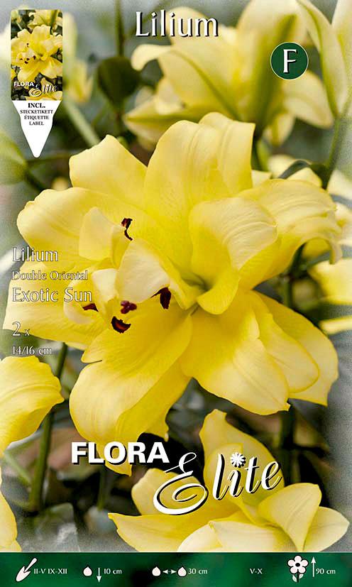 12-Flora-Elite,-Lilie,-Gefüllte-Orientalische,-Exotic-Sun