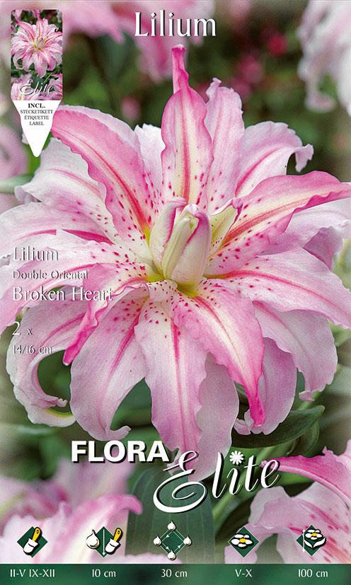 14-Flora-Elite,-Lilien,-Gefüllte-Orientalische,-Broken-Heart