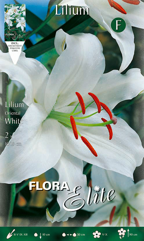 2-Elite,-Lilien,-Orientalische-Hybriden,-White